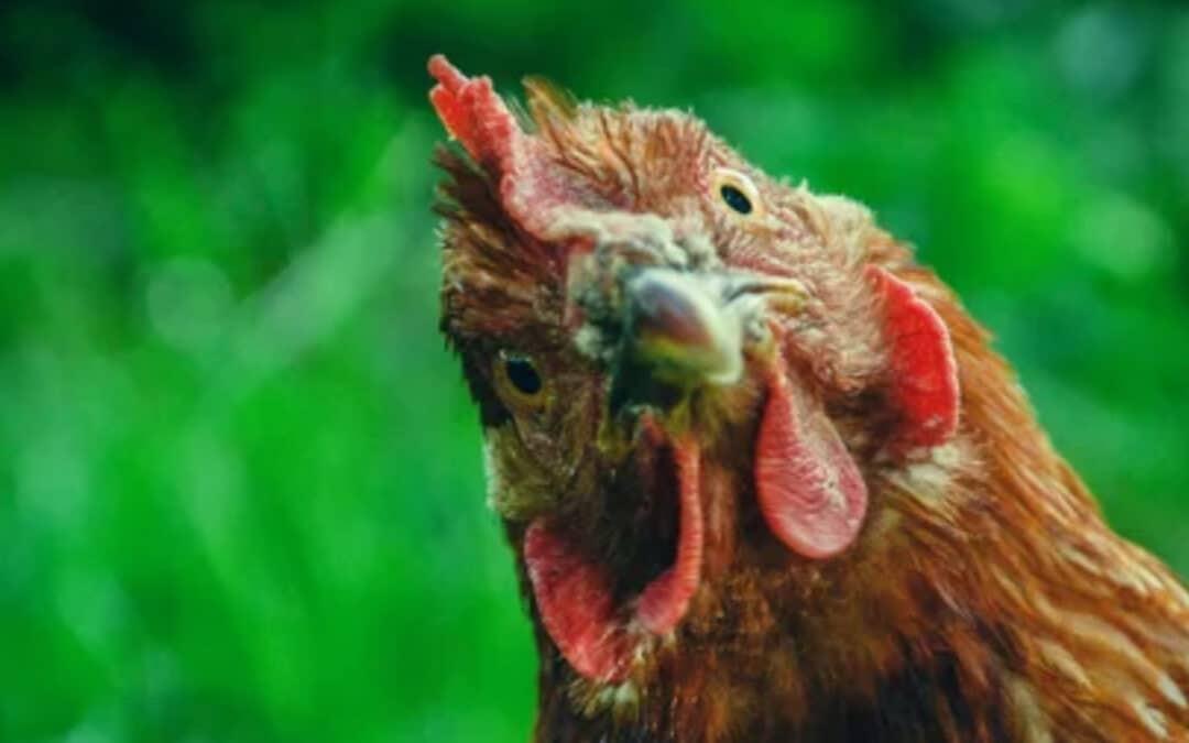 Chick-fil-A bonds are tight