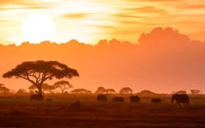 LOCUSTS RAVAGE KENYA AGAIN – HELP VULNERABLE CHRISTIANS REBUILD THEIR LIVES