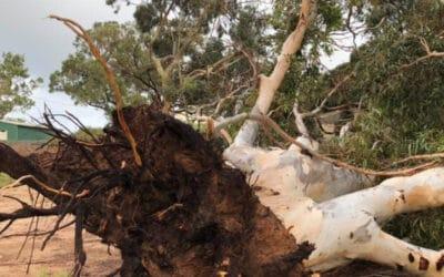 Tropical Cyclone Seroja Hits 1,000 km Stretch of Western Australia